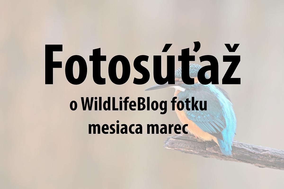 fotosutaz-marec