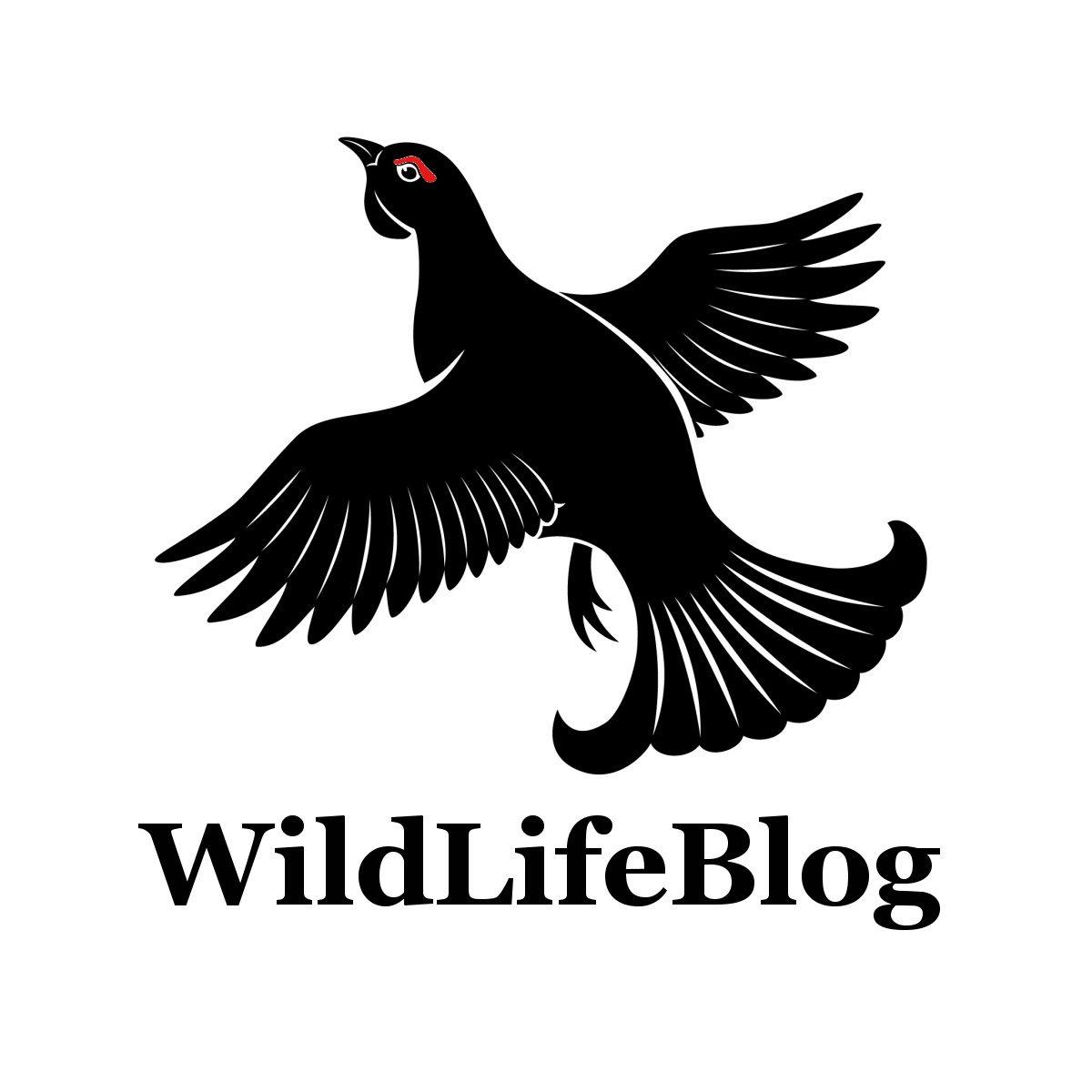 logo WildLifeBlog